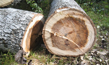 abattage arbre toulouse, abattage arbre colomiers , entretien jardin toulouse, entretien espace verts toulouse