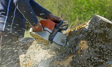 entretien espaces verts toulouse , enlevement arbre toulouse , enlevement arbre colomiers , paysagiste toulouse