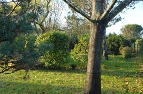 jardinier toulouse , paysagiste colomiers, creation jardin toulouse , paysagiste toulouse , amenagement jardin colomiers